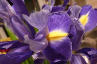 Iris 7th January 2011