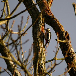 Woody Woodpecker 7th February 2011