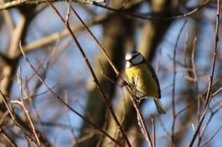 Look At The Birdy 10th February 2011