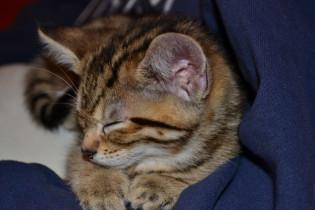 More Kitten Cuteness